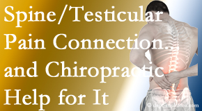 Pensacola Spinal Rehab Center explains recent research on the connection of testicular pain to the spine and how chiropractic care helps its relief.