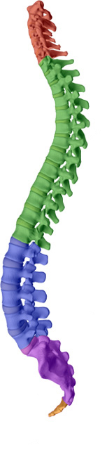 Pensacola Spinal Rehab Center aims to help maintain or attain a healthy spine with healthy discs with Pensacola chiropractic care.
